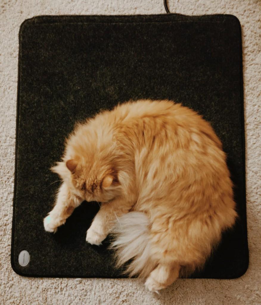 70 x 60 cm auch für größere Haustiere geeignet.